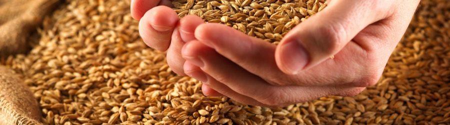 Семена рыжея при сахарном диабете: польза и инструкция по применению
