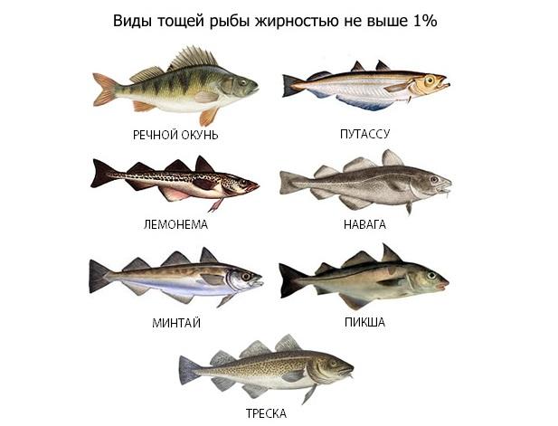 Виды тощей рыбы